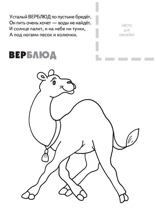 Раскраски Животные леса. Раскраски для детей 3-10 лет. | 766x540