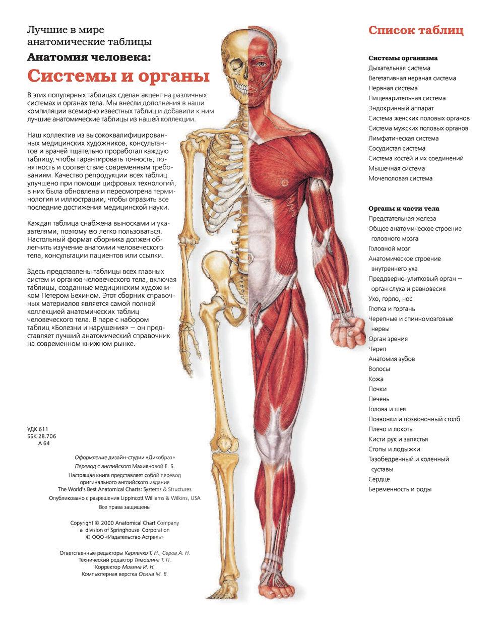 Анатомия человека в картинках суставы лечение и профилактика болезней суставов скачать бесплатно