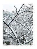 Главные блюда зимы. Рождественские истории и рецепты — фото, картинка — 10