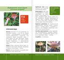 Самые распространенные съедобные грибы — фото, картинка — 4