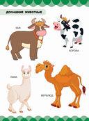 Домашние животные — фото, картинка — 1