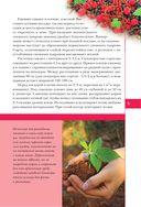 Полезные ягоды. Секреты сверхурожая — фото, картинка — 4