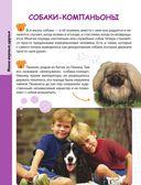 Домашние животные — фото, картинка — 8