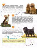 Домашние животные — фото, картинка — 9