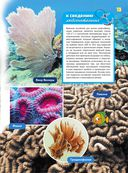 Жизнь океана — фото, картинка — 13