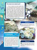 Жизнь океана — фото, картинка — 6