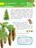 Деревья и травы — фото, картинка — 4