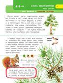 Деревья и травы — фото, картинка — 5