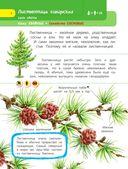 Деревья и травы — фото, картинка — 6