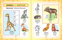 Англо-русский визуальный словарь для детей — фото, картинка — 3