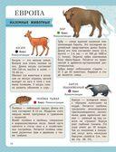 Атлас животных для малышей — фото, картинка — 10