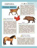 Атлас животных для малышей — фото, картинка — 12