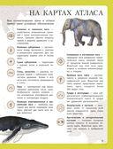 Атлас животных для малышей — фото, картинка — 5