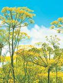 Большая иллюстрированная энциклопедия разумно ленивого огородника и садовода — фото, картинка — 4