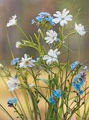 Весенние цветы из полимерной глины — фото, картинка — 4