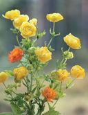 Весенние цветы из полимерной глины — фото, картинка — 5