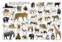 Дикие животные. Альбом наклеек — фото, картинка — 1