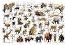 Дикие животные. Альбом наклеек — фото, картинка — 2