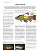 Рыбы рек и озер. Всемирная иллюстрированная энциклопедия — фото, картинка — 11