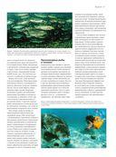 Рыбы рек и озер. Всемирная иллюстрированная энциклопедия — фото, картинка — 4
