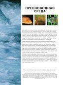 Рыбы рек и озер. Всемирная иллюстрированная энциклопедия — фото, картинка — 6