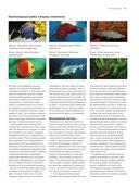 Рыбы рек и озер. Всемирная иллюстрированная энциклопедия — фото, картинка — 8