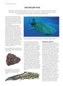 Рыбы рек и озер. Всемирная иллюстрированная энциклопедия — фото, картинка — 9