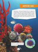 Подводный мир — фото, картинка — 13
