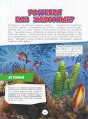 Подводный мир — фото, картинка — 4