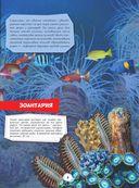 Подводный мир — фото, картинка — 5