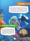 Подводный мир — фото, картинка — 7