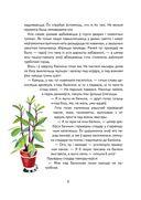 Кот Шпрот і таямніца атракцыёнаў — фото, картинка — 3