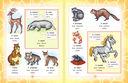 Итальянско-русский визуальный словарь для детей — фото, картинка — 4