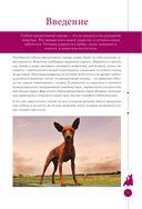 Мопсы, йорки и другие собачки той-пород (м) — фото, картинка — 6