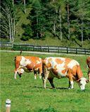 Мясо есть! — фото, картинка — 9