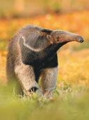 Большая книга о животных. 1001 фотография — фото, картинка — 11