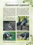 Большая книга о животных. 1001 фотография — фото, картинка — 12