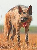 Большая книга о животных. 1001 фотография — фото, картинка — 13