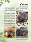 Большая книга о животных. 1001 фотография — фото, картинка — 15