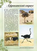 Большая книга о животных. 1001 фотография — фото, картинка — 7