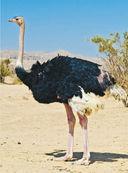 Большая книга о животных. 1001 фотография — фото, картинка — 8