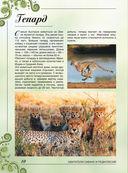 Большая книга о животных. 1001 фотография — фото, картинка — 9