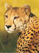 Большая книга о животных. 1001 фотография — фото, картинка — 10