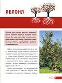 Яблони и груши. Секреты урожая от Октябрины Ганичкиной — фото, картинка — 4