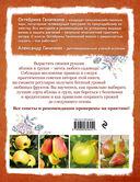 Яблони и груши. Секреты урожая от Октябрины Ганичкиной — фото, картинка — 7