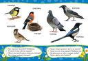 Птицы — фото, картинка — 1