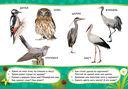 Птицы — фото, картинка — 2