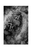 Шесть серебряных пуль — фото, картинка — 6
