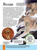 Животные — фото, картинка — 10
