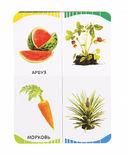 Фрукты, овощи, ягоды — фото, картинка — 3